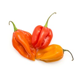 Habanero Chillies