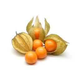 Physalis (Cape Gooseberries)