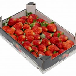 strawberry-box-2